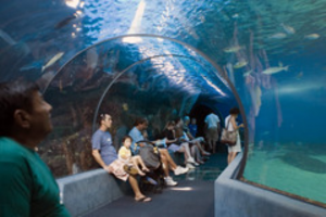 Maui Ocean Center Tunnel